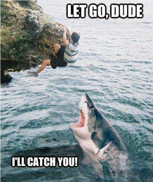 Sharkweek3