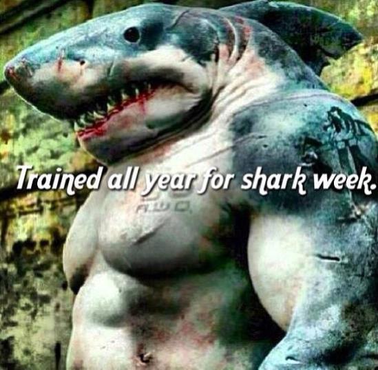 Sharkweek4