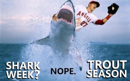 Sharkweek5