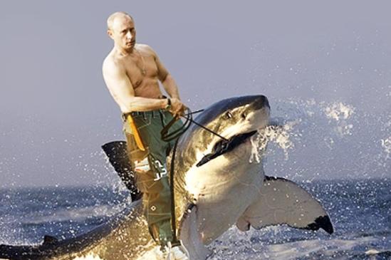 Sharkweek8