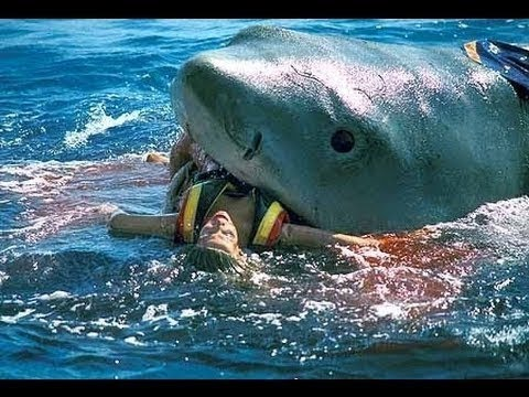 "Scene from ""Jaws:  The Revenge"""